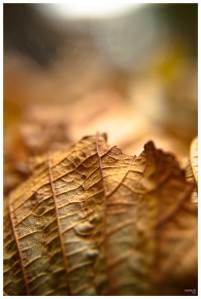 autumn-leaf-01-online