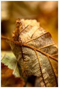autumn-leaf-02-online