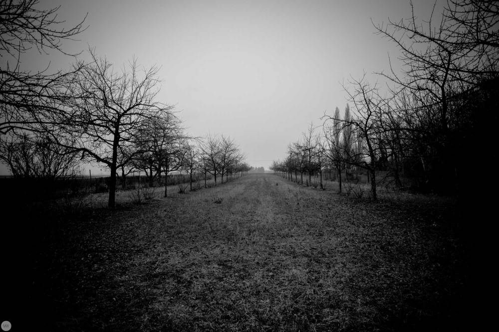 yesterday-the-land-was-dark_001_online