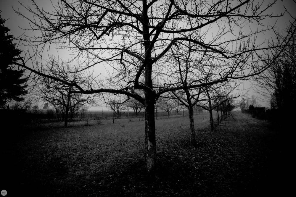 yesterday-the-land-was-dark_002_online