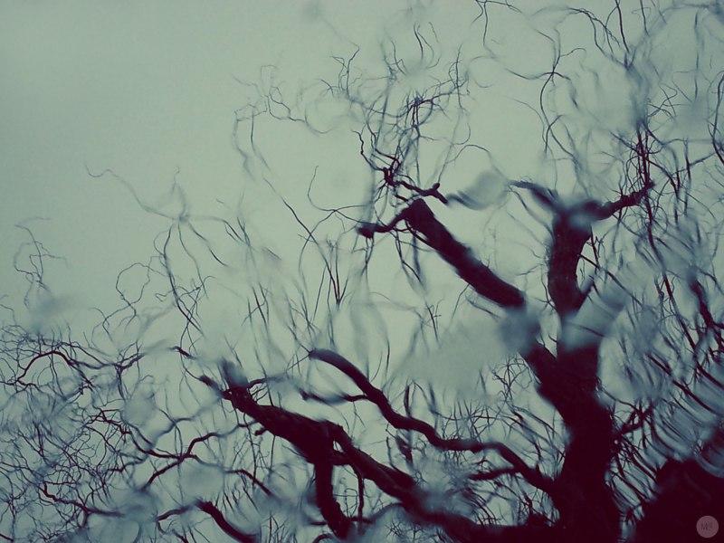 glasstree_online