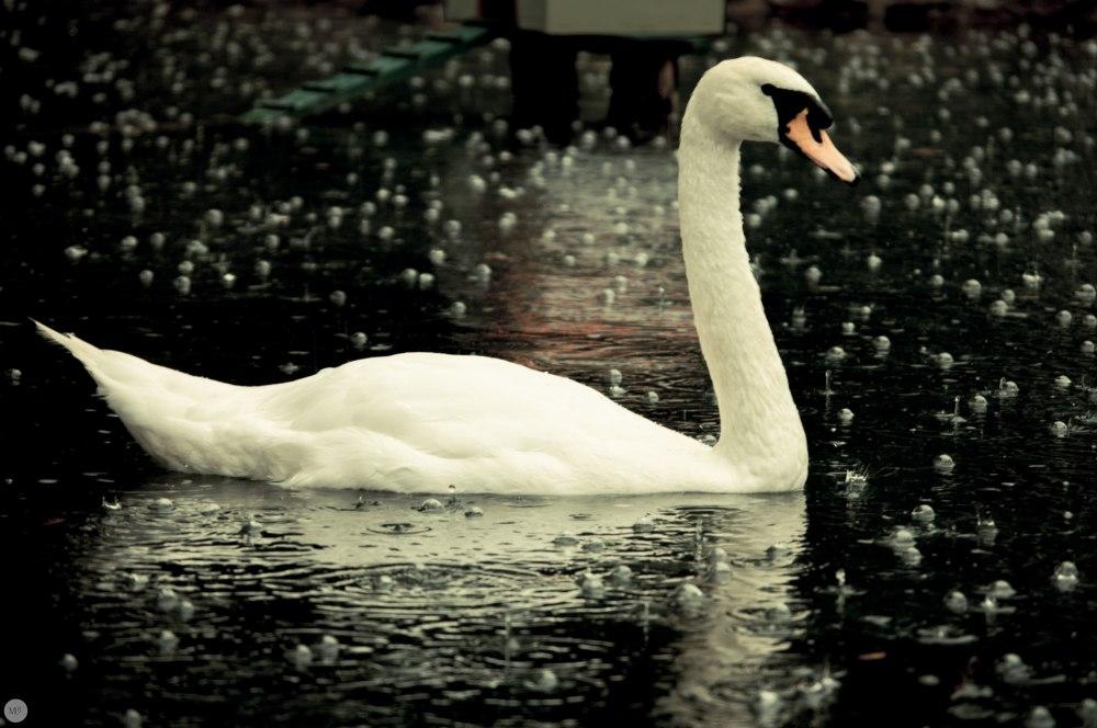 Regen_online