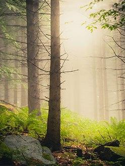 artikelbild_mist-in-the-woods_pt1