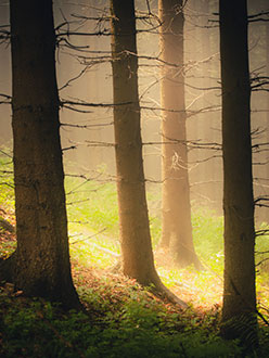artikelbild_mist-in-the-woods_pt2