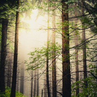 mist in the woods pt.I http://wp.me/p1Dxv-2Ls