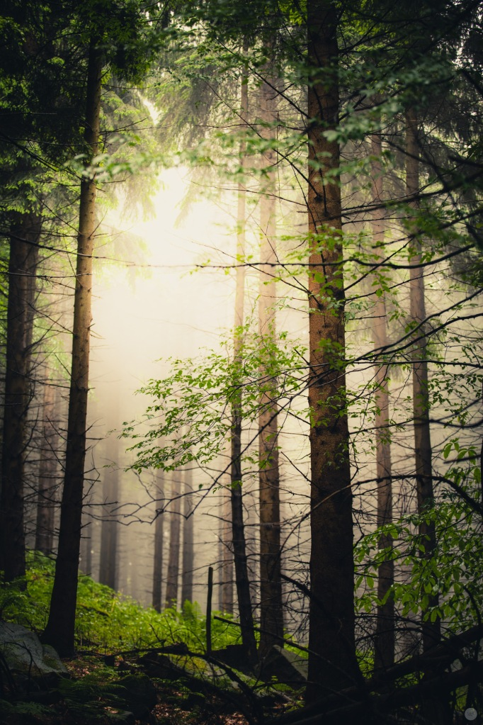 mist-in-the-woods_001_online