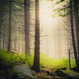 mist-in-the-woods_002_online