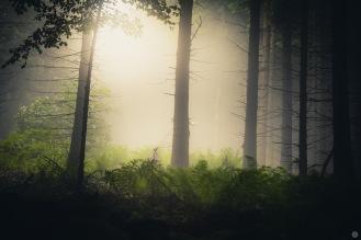 mist-in-the-woods_003_online