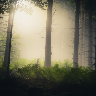 mist-in-the-woods_003_online