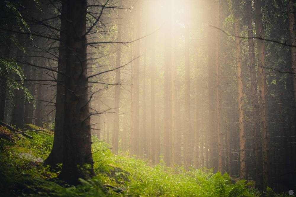 mist-in-the-woods_004_online