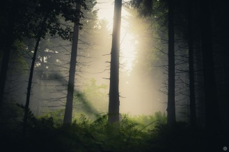 mist-in-the-woods_006_online