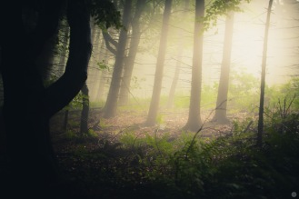 mist-in-the-woods_007_online