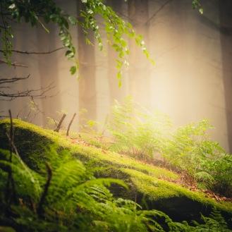 mist-in-the-woods_008_online