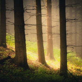 mist in the woods pt.II http://wp.me/p1Dxv-2LH