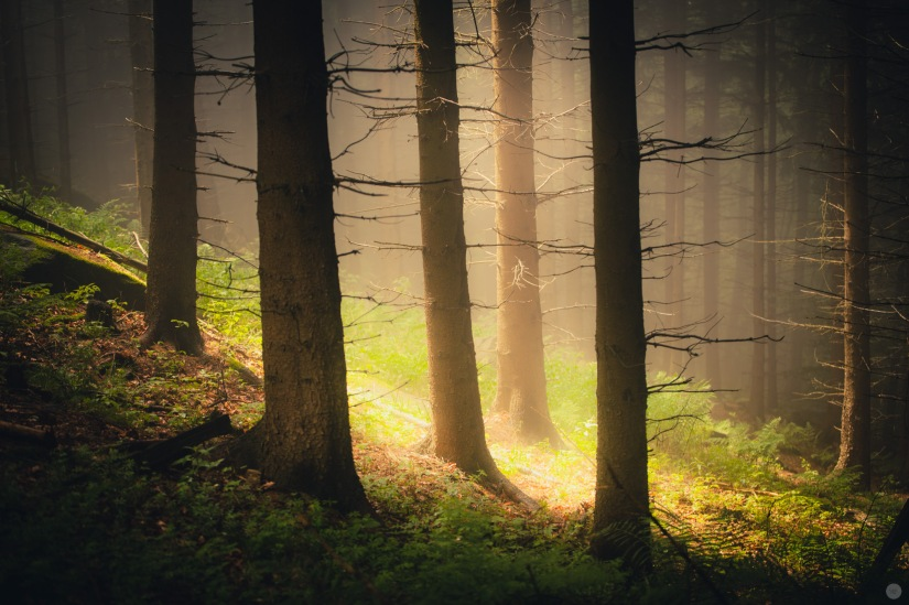 mist-in-the-woods_009_online