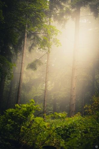 mist-in-the-woods_010_online