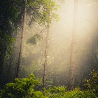 mist-in-the-woods_010_online