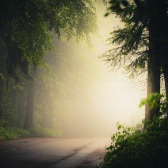 mist-in-the-woods_011_online