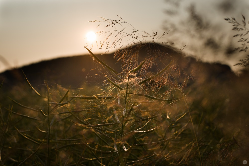 sundown-meadow_001_online