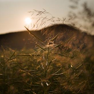 sundown-meadow_001_online