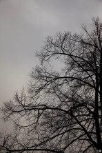 testfotos_sigma-24-105mm_002_online