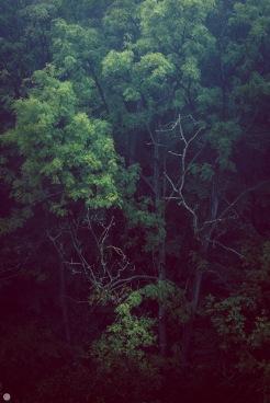 nightspiders-nest_001_online