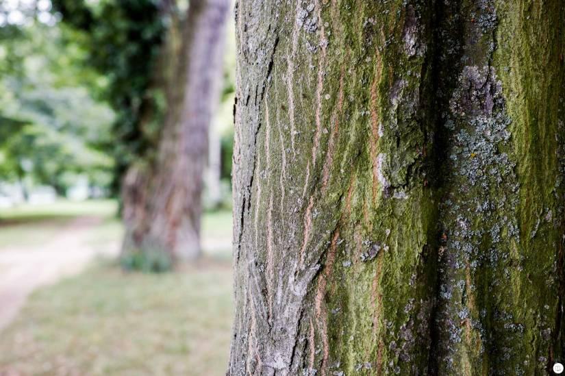 hands-on_sigma-dp2-quattro_tree