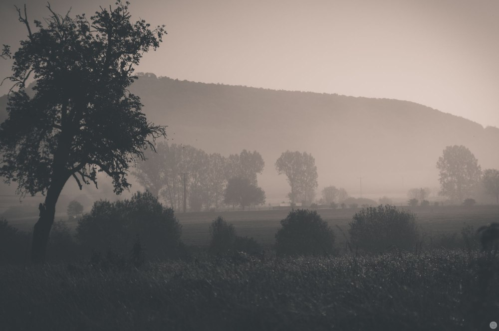 2014-online_0100_morning-shades_001_online