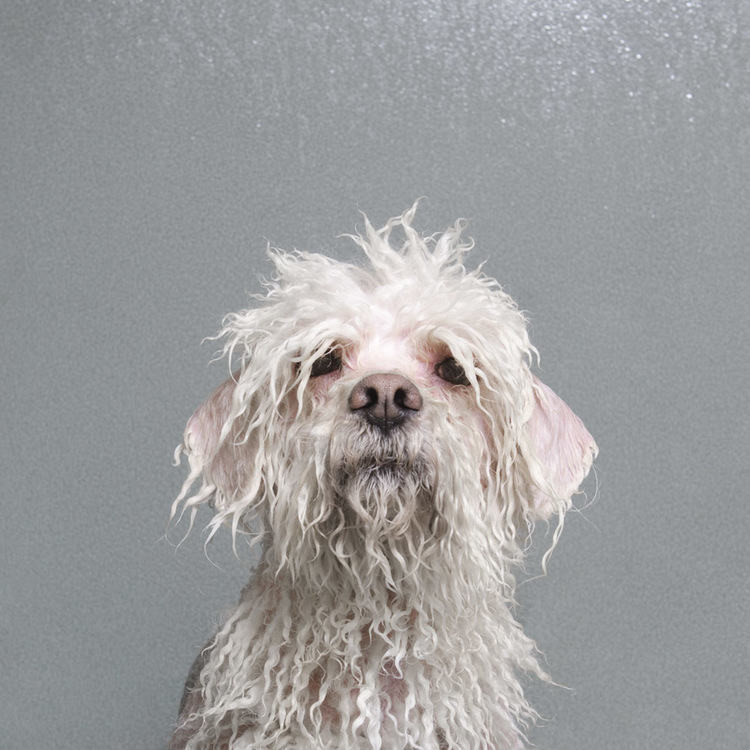 ©  Wet Dog, Sophie Gamand, www.sophiegamand.com