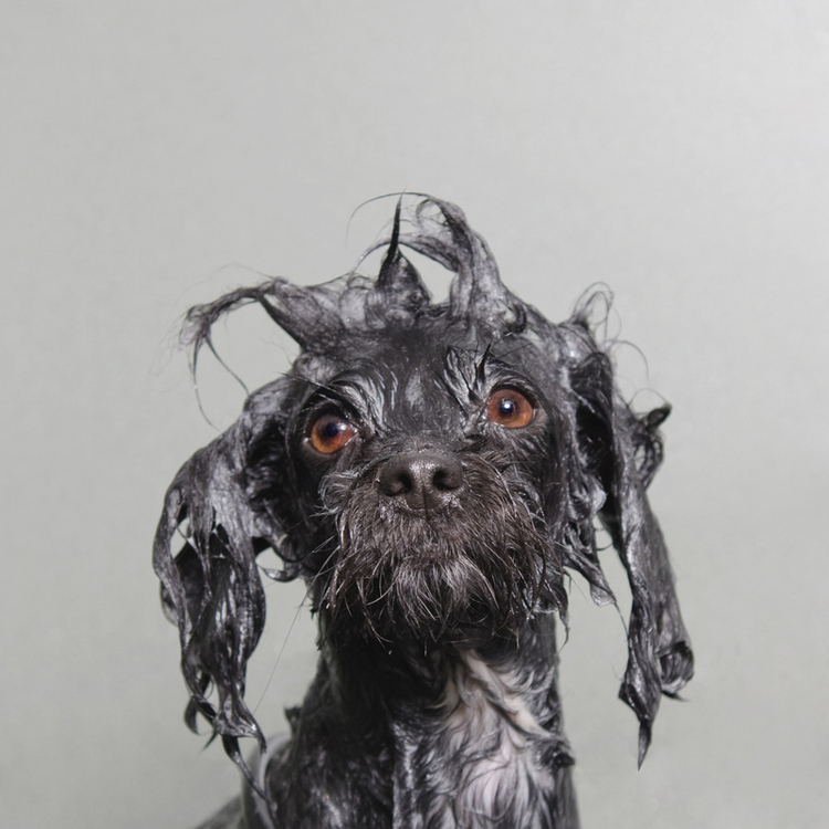 ©  Coco, Wet Dog, Sophie Gamand, www.sophiegamand.com