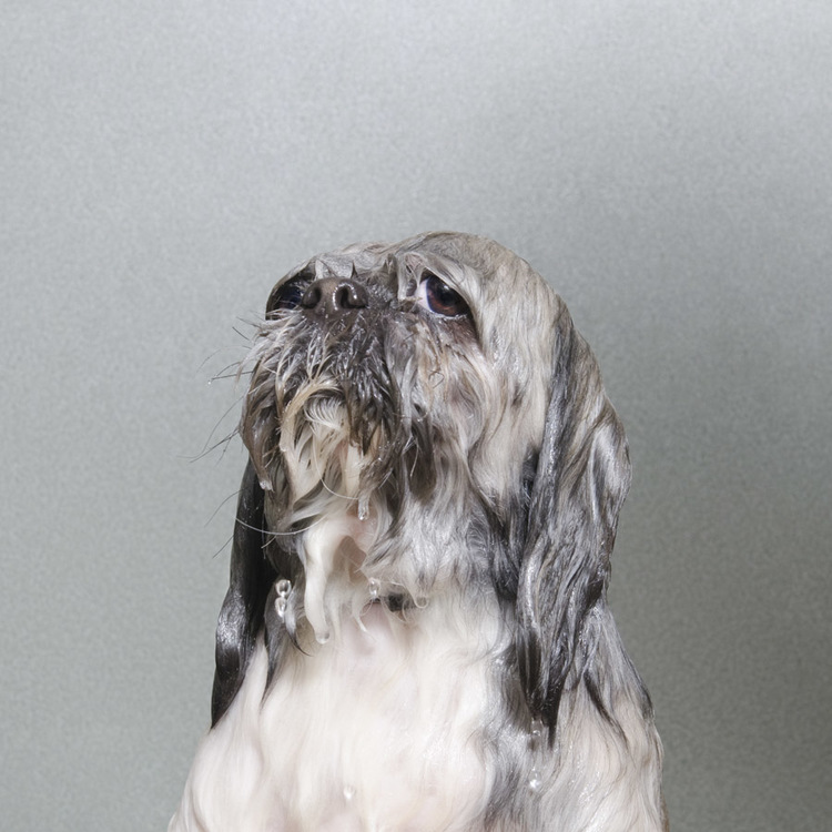 ©  Commando, Wet Dog, Sophie Gamand, www.sophiegamand.com