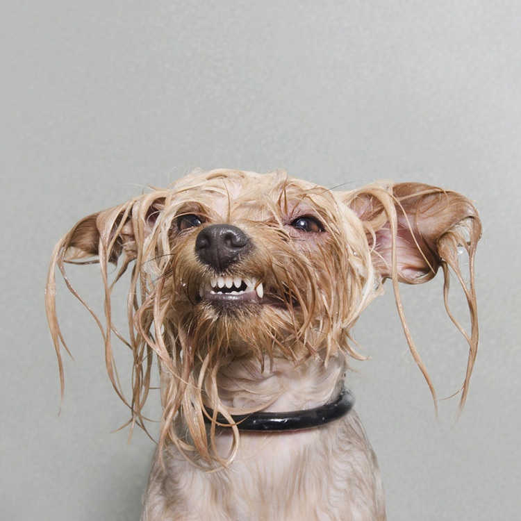 ©  Diamond, Wet Dog, Sophie Gamand, www.sophiegamand.com