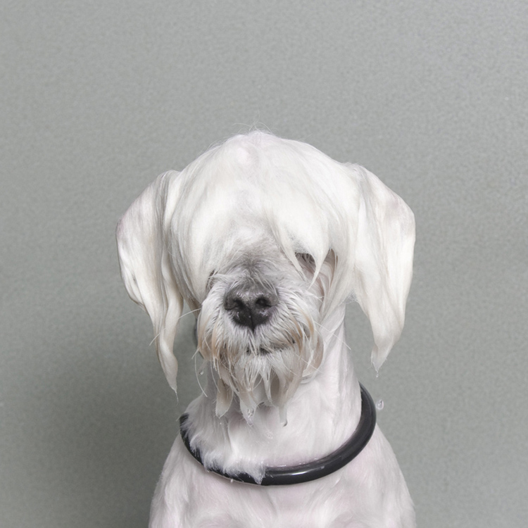 ©  Marshmallow, Wet Dog, Sophie Gamand, www.sophiegamand.com