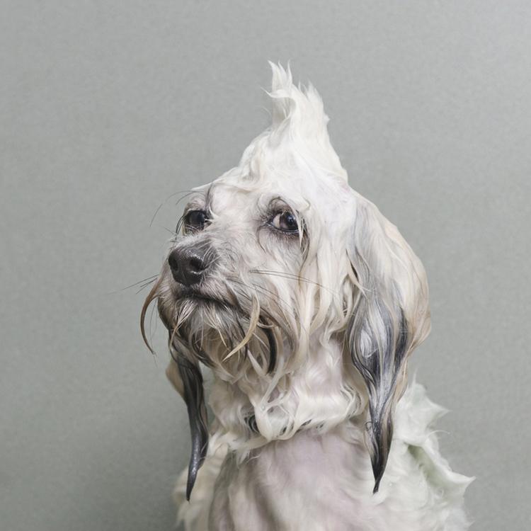©  Oscar, Wet Dog, Sophie Gamand, www.sophiegamand.com