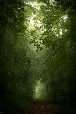 2014-online_0154_green-hallway_001_online