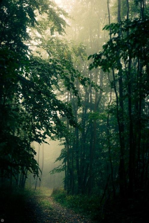 2014-online_0157_forestlands_001_online
