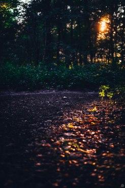 2014-online_0871_dark-orange-evening_001