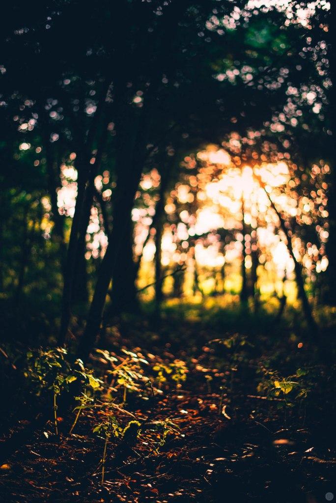 2014-online_0872_dark-orange-evening_002