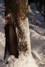 2015-online_0022_hands-on_canon-100-400mm_014