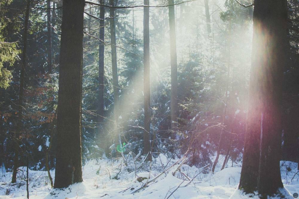 2015-online_0085_winterkitsch