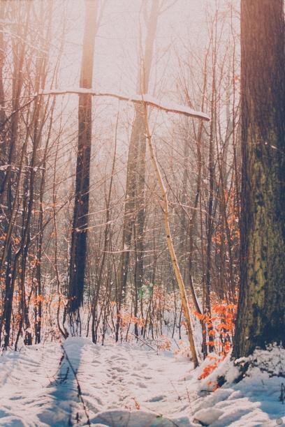 snowy_001