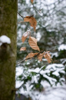 2015-online_0108_hands-on_sony-alpha-72_021