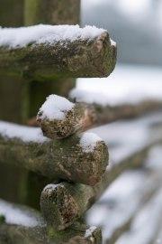 2015-online_0341_hands-on_fujinon-56mm-f12_007