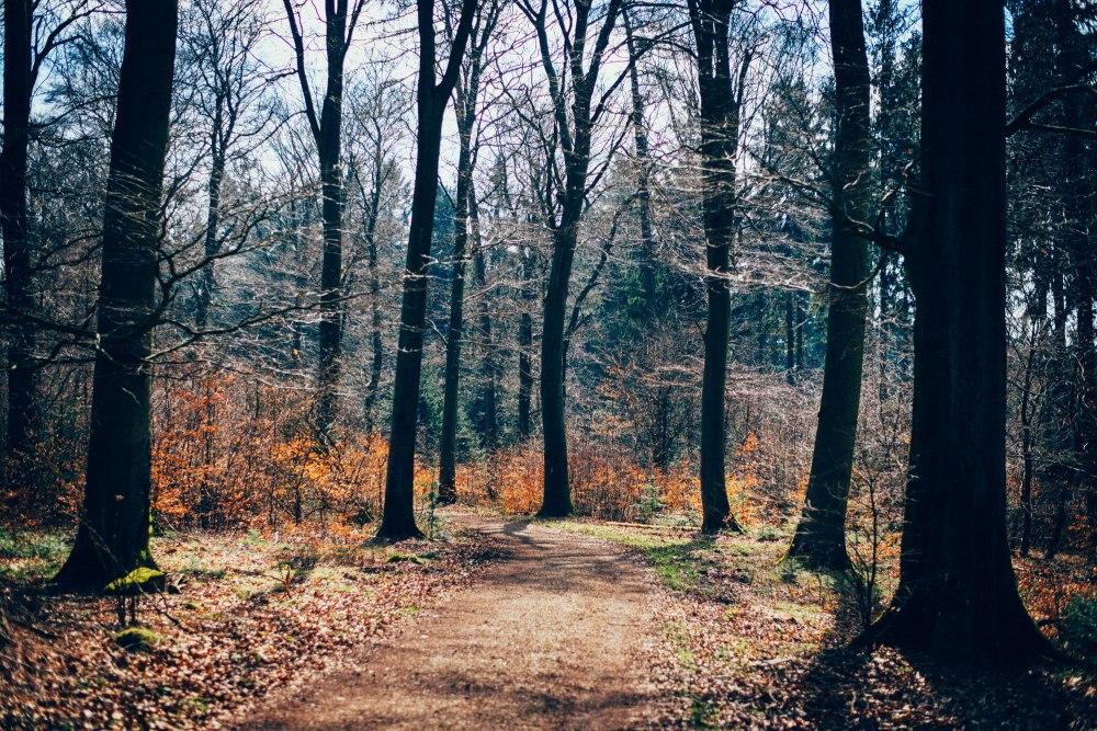 dunkelkammerkunst-05_wood-ektar