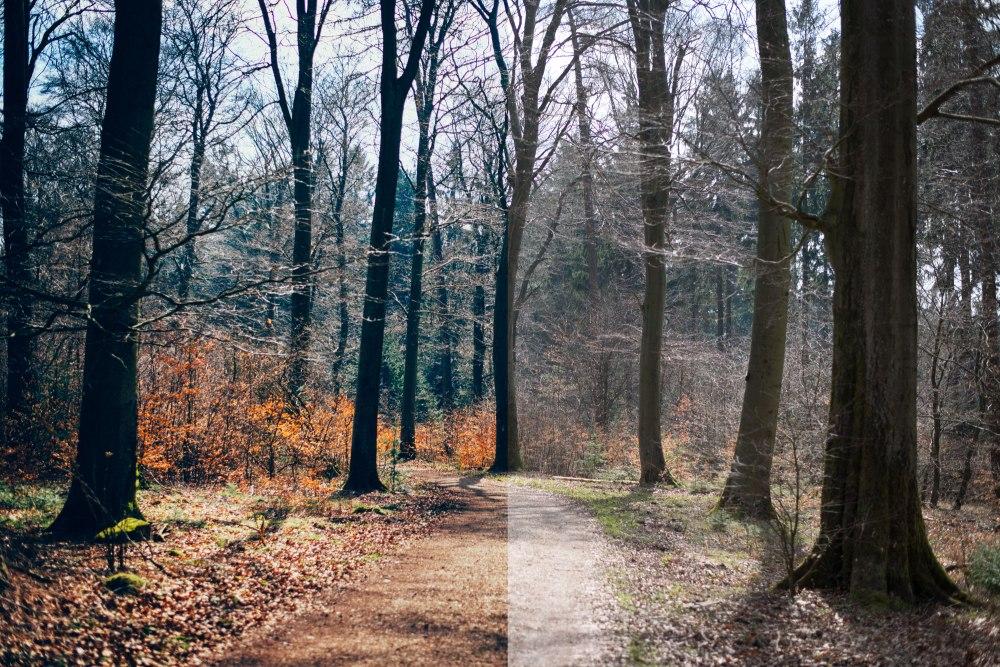 dunkelkammerkunst-05_wood-versus