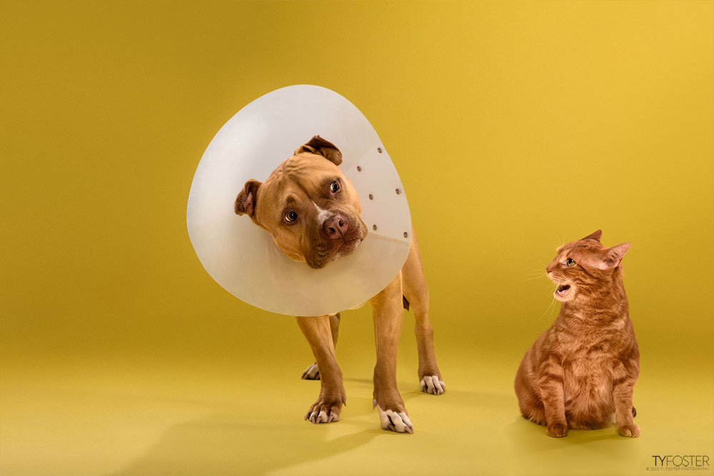 TIMEOUT_cone_of_shame_dog_portraits_04