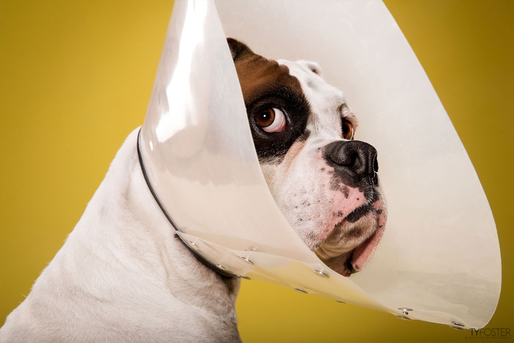 TIMEOUT_cone_of_shame_dog_portraits_05