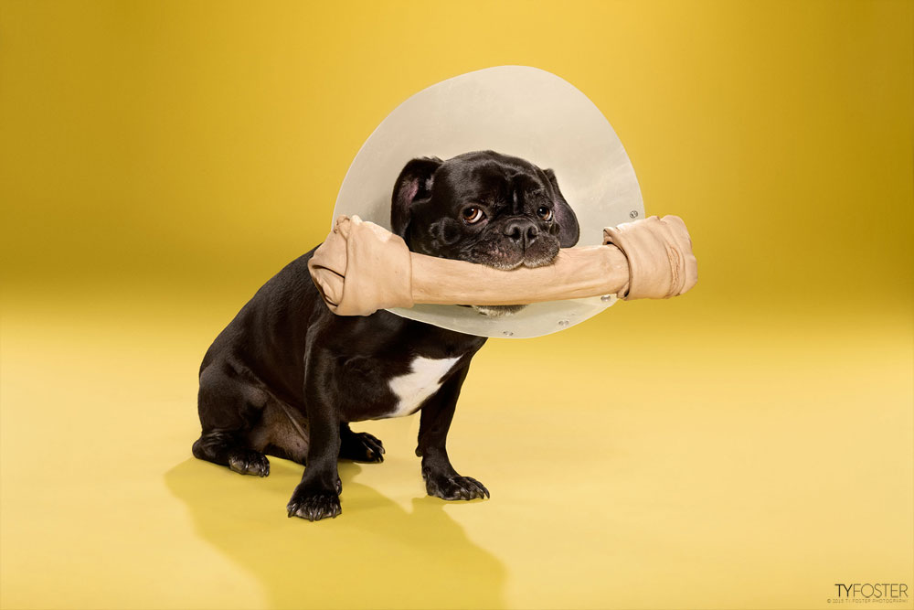 TIMEOUT_cone_of_shame_dog_portraits_07