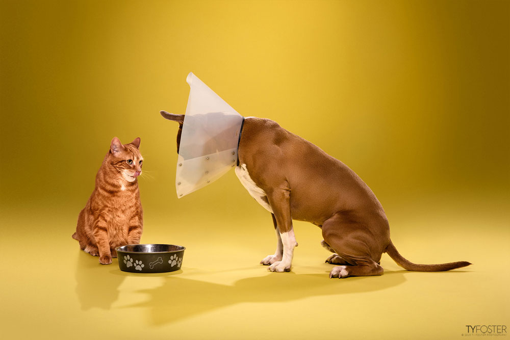 TIMEOUT_cone_of_shame_dog_portraits_14