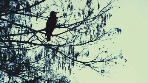 artikelbild_dunkelkammerkunst_red-leaf-redwood
